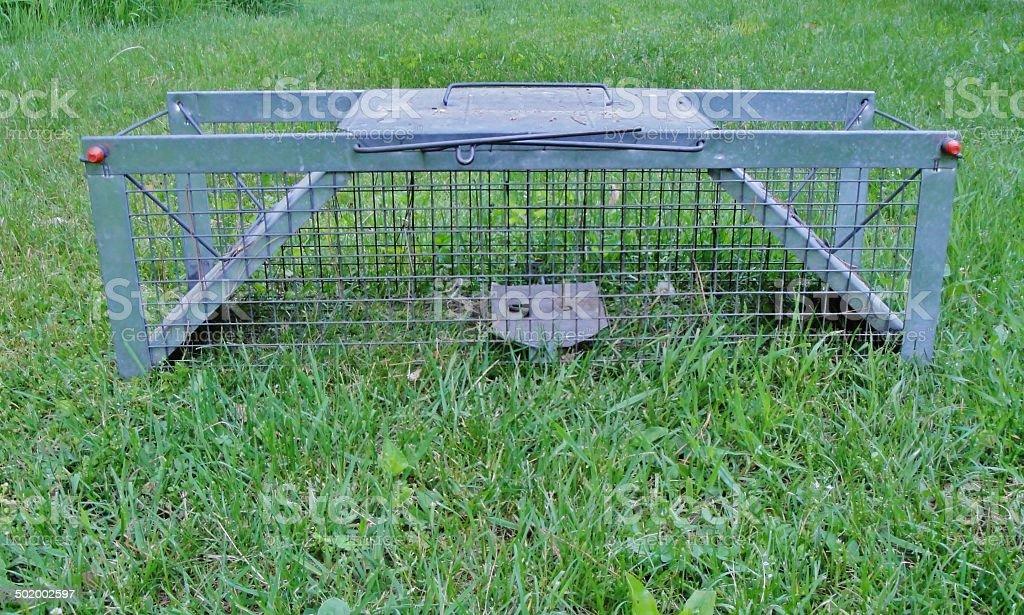 Live Animal Trap stock photo