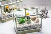 Live cactus in a terrarium with self ecosystem