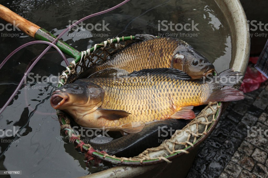 Live carps on sale in Prague, Czech Republic. stock photo