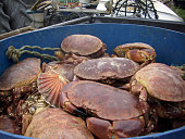 Live crabs and shellfish