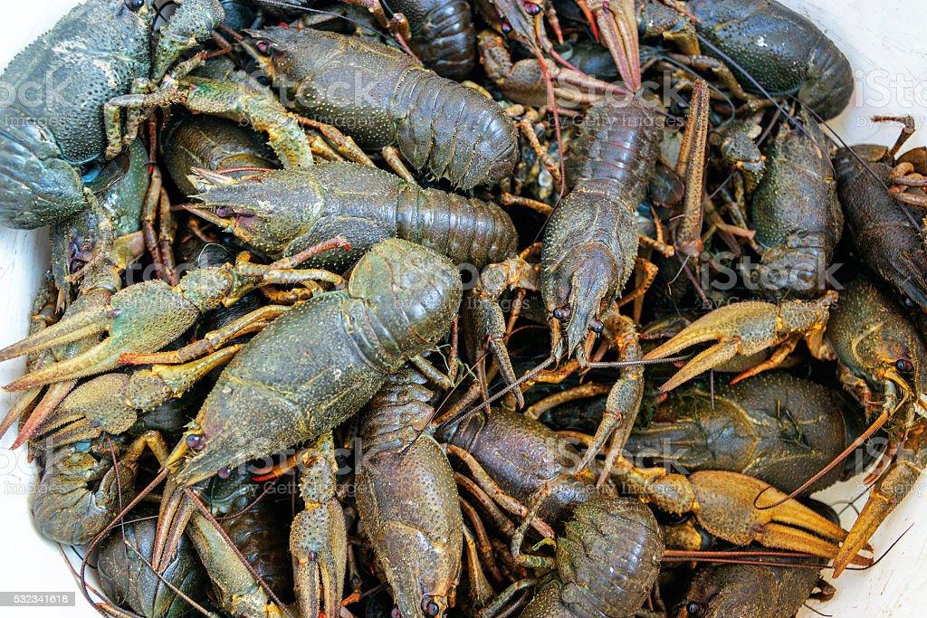 live crayfish closeup stock photo