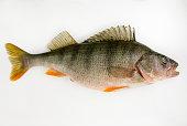 Live fish perch