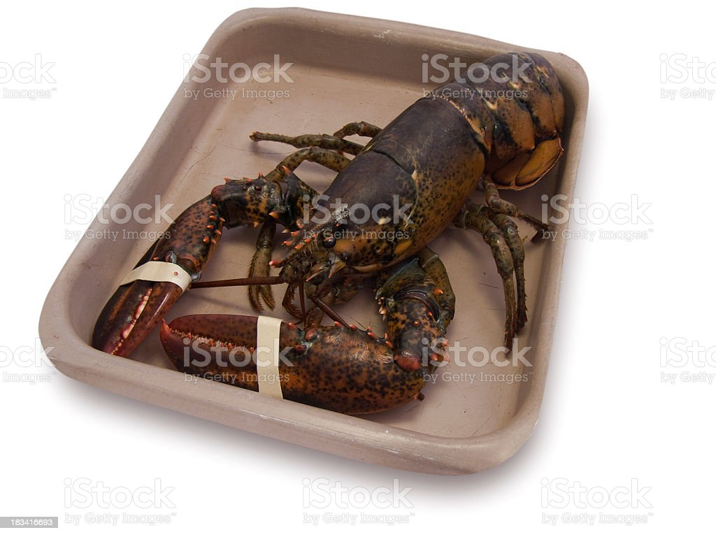 Live lobster stock photo