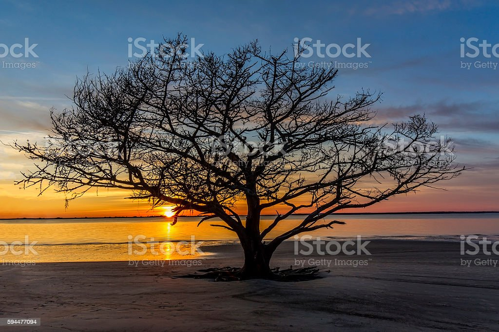 Live Oak Tree Growing on a Georgia Beach at Sunset stock photo