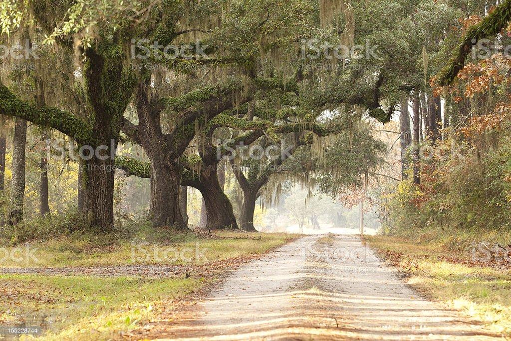 Live Oak Tree Lined Plantation Road Driveway stock photo