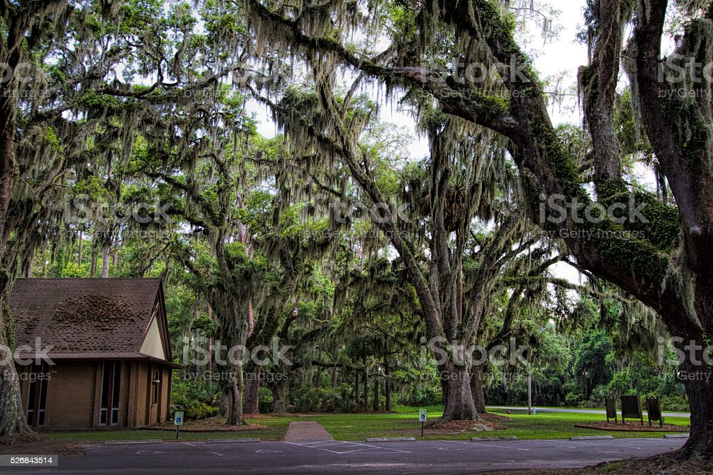 Live Oak Trees By Church stock photo