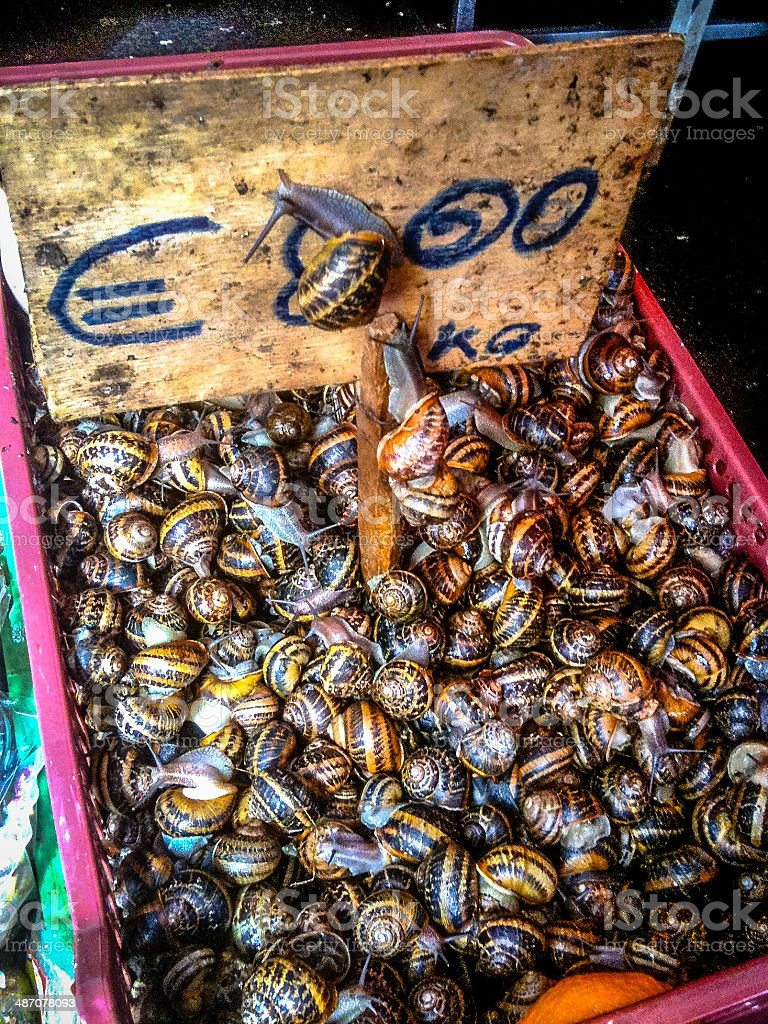 Live Snails (Escargot) for Sale royalty-free stock photo