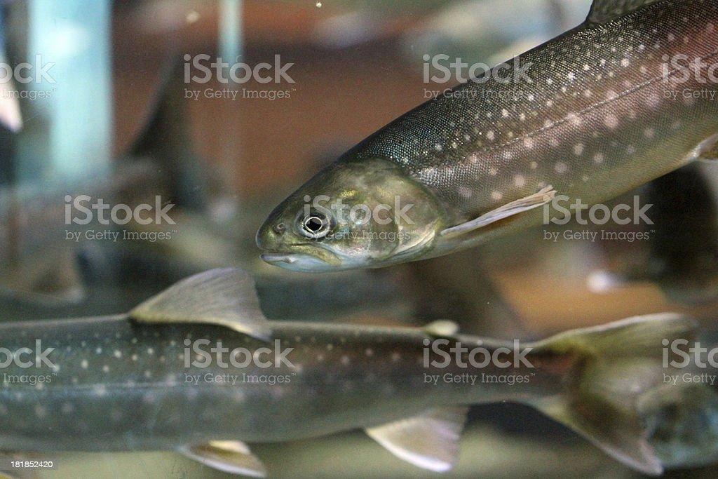 Lively Seas stock photo