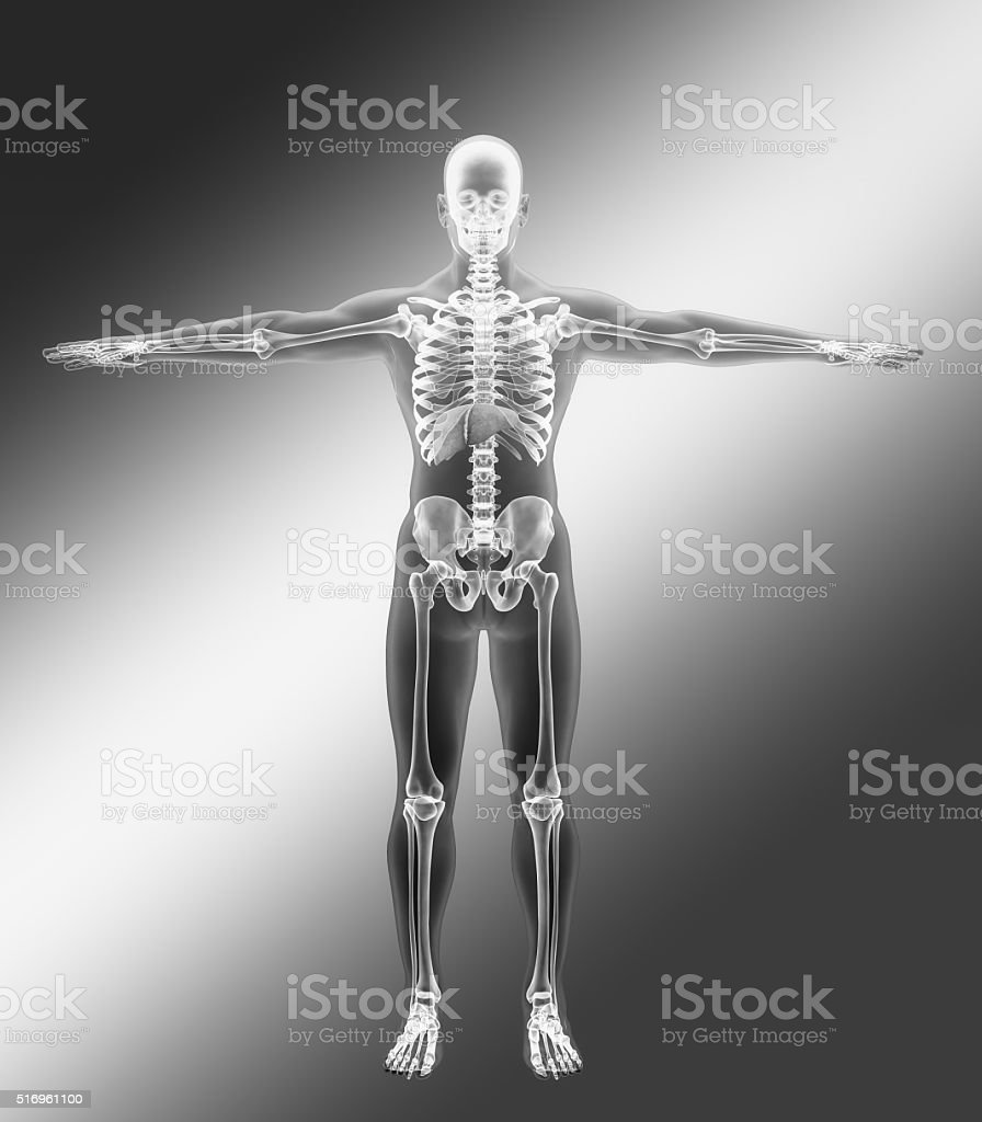liver in a human male stock photo