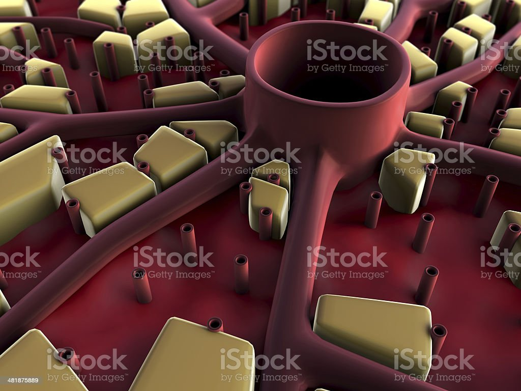 liver, liver structure stock photo