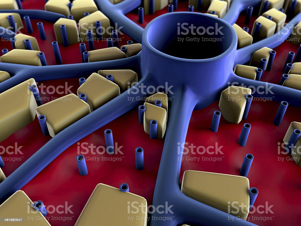 liver,  liver surface royalty-free stock photo
