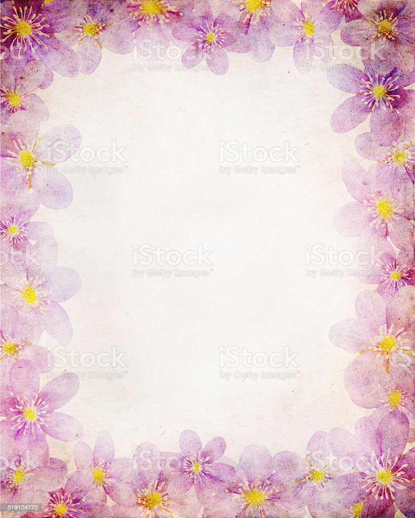 liverwort paper stock photo
