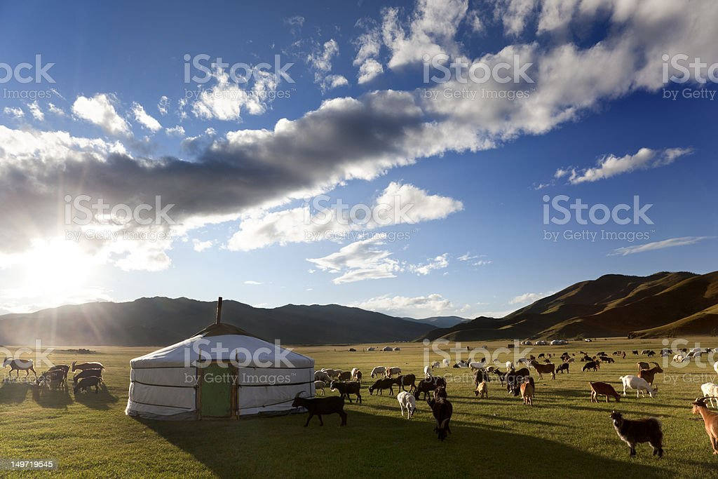 Livestock in a pasture around haystack on partly cloudy day stock photo
