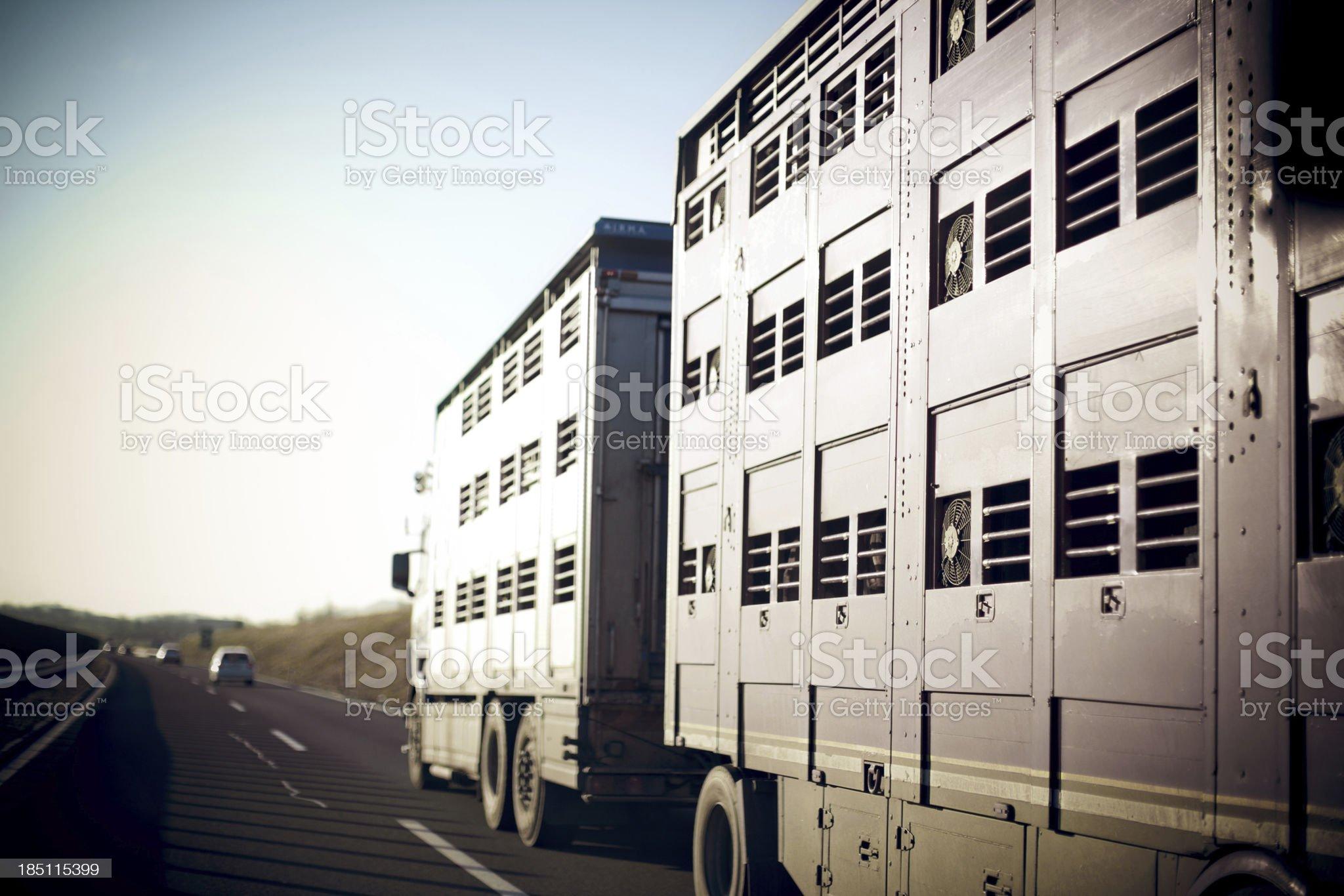 Livestock transportation royalty-free stock photo