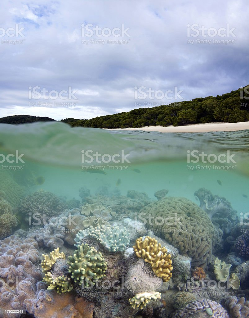 Living coral reef on Whitehaven Beach stock photo