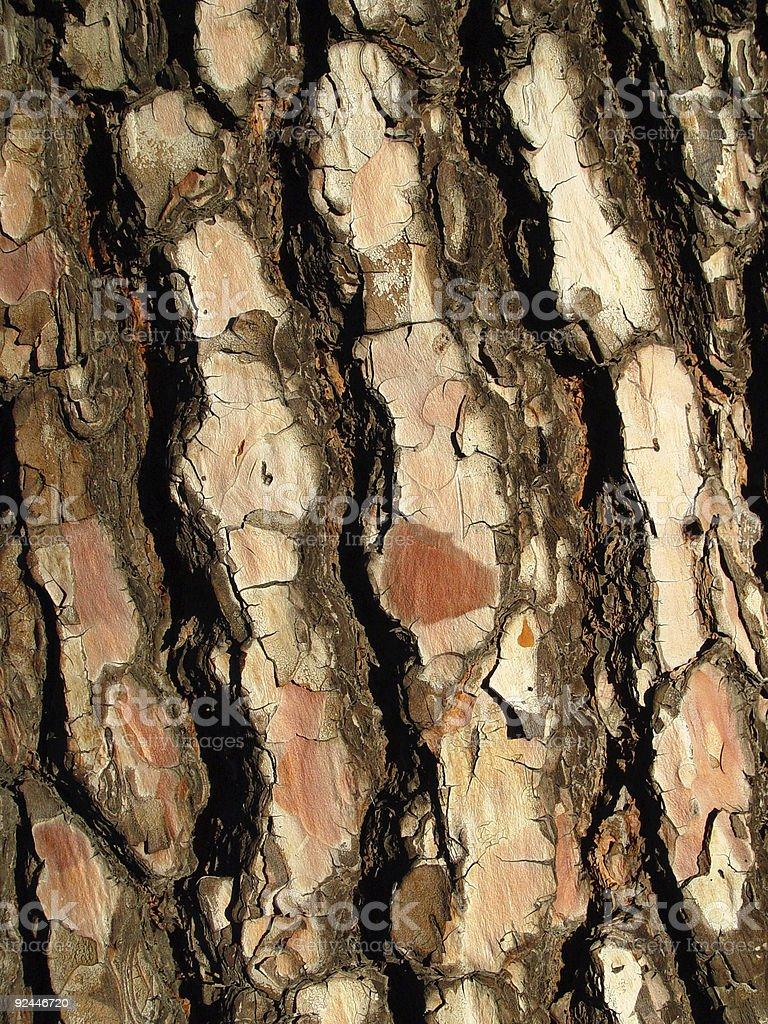 Living pine bark royalty-free stock photo
