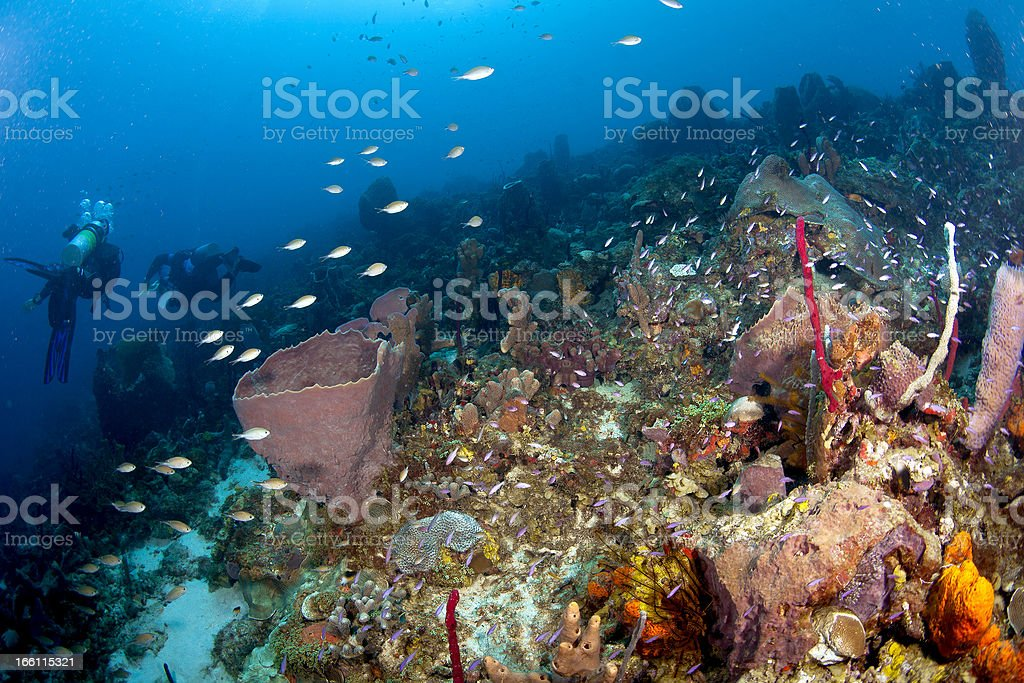 Living Reef in St Lucia royalty-free stock photo