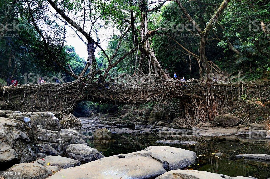 Living Root Bridge stock photo