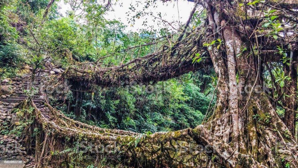 Living Root Bridges of Meghalaya - Double Decker stock photo