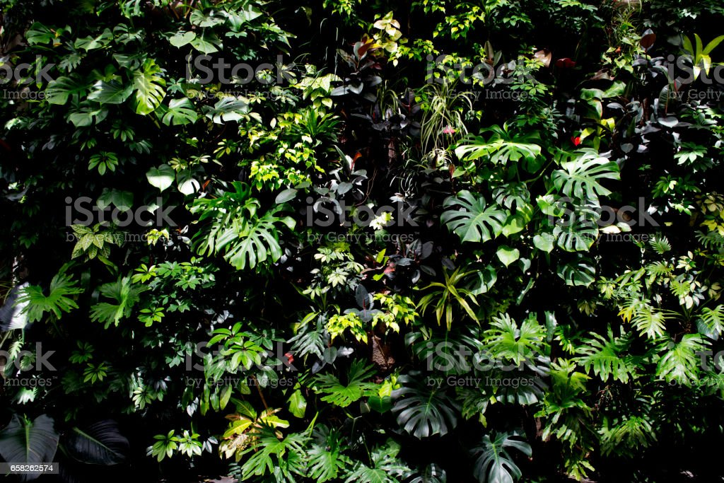 Living Tropical Plant Wall stock photo