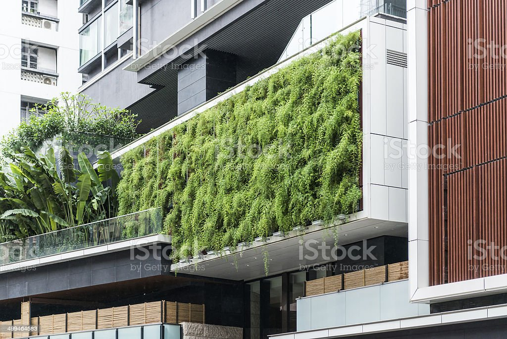 Living Wall of Ferns on Modern Building, Sutainable Gardening stock photo