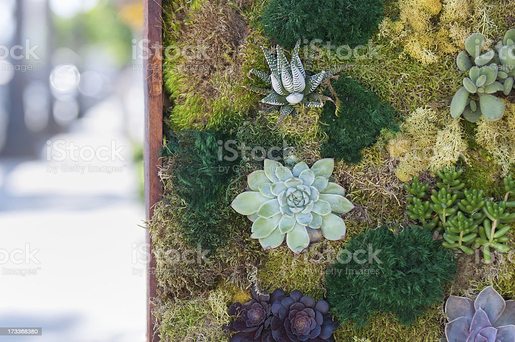 Living Wall of Plants on City Street stock photo