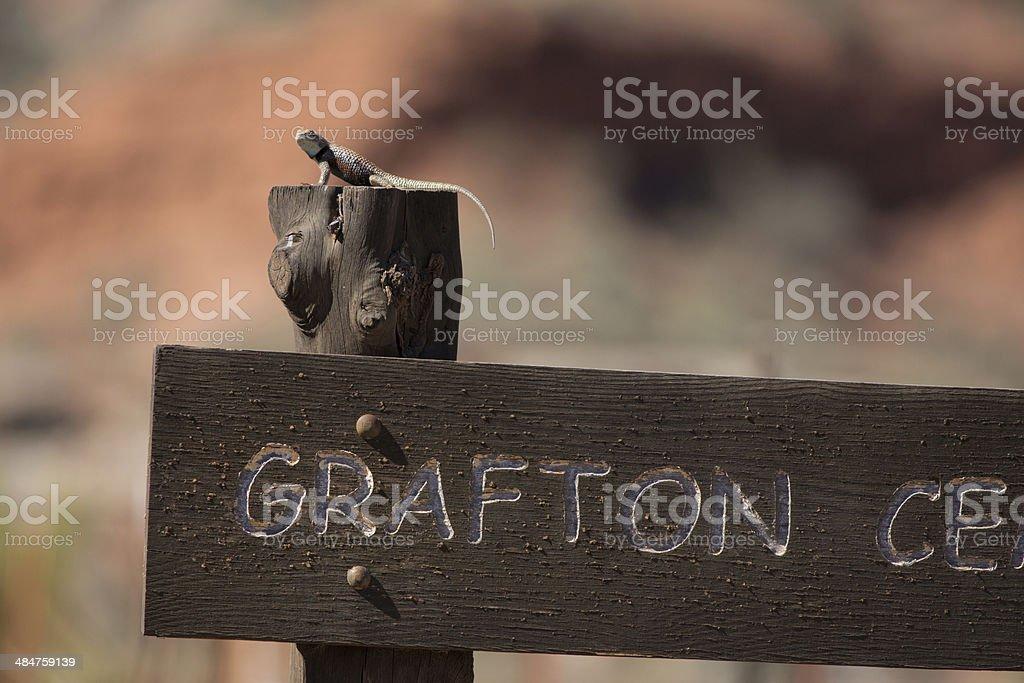 Lizard at Grafton stock photo