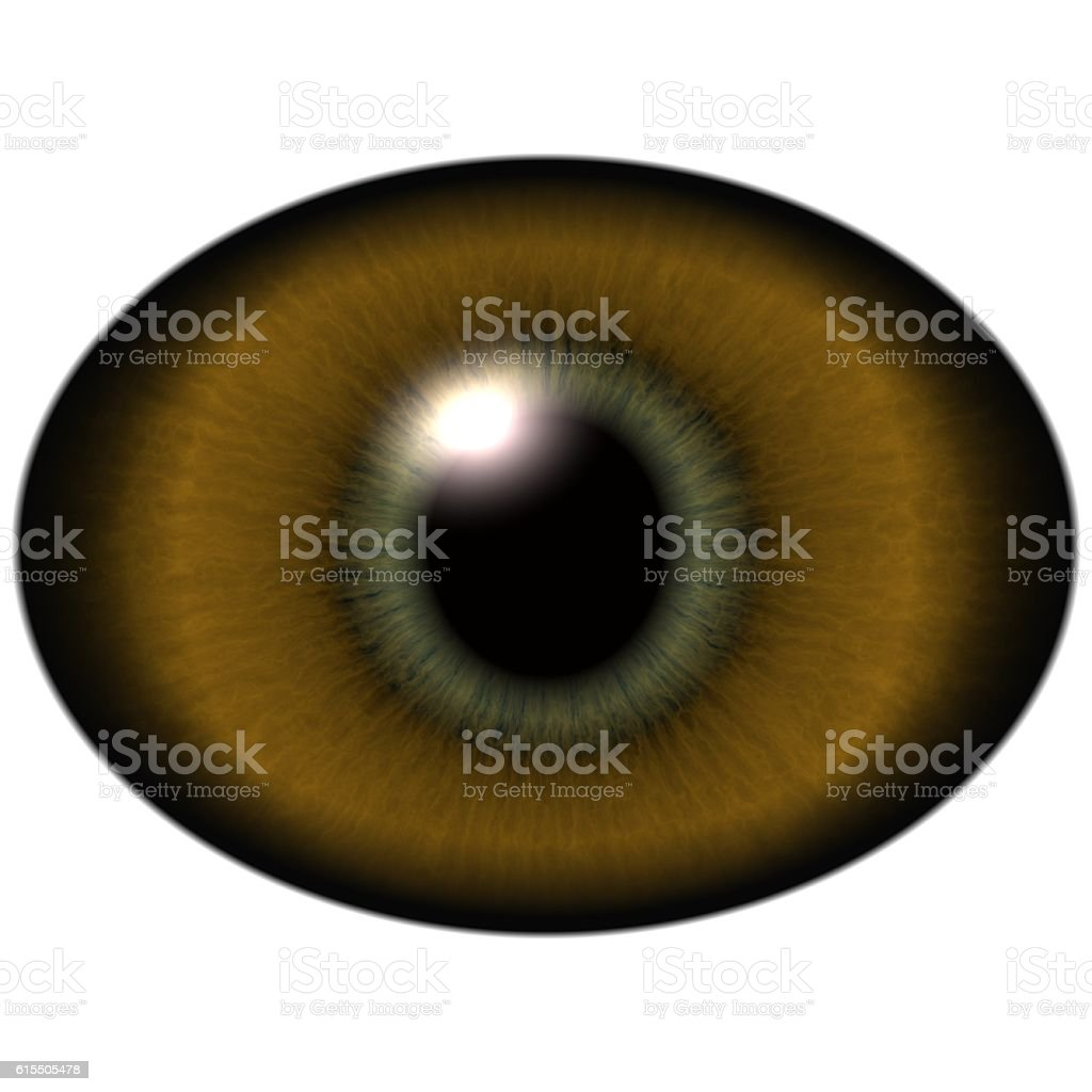 Lizard eye.  Isolated brown elliptic eye,  striped iris stock photo