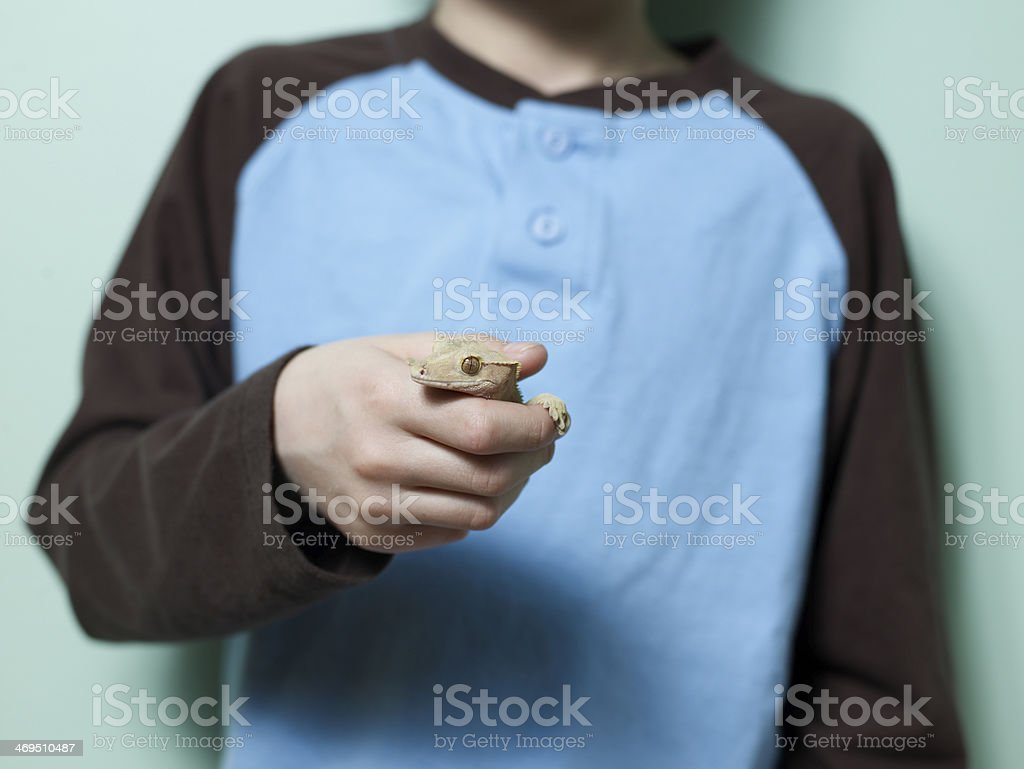 Lizard in Boy's Hand royalty-free stock photo