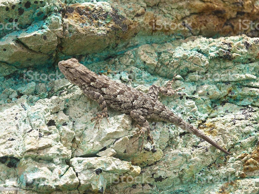 Lizard in green royalty-free stock photo