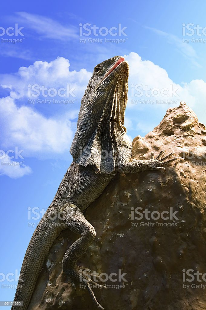 Lizard on a stone royalty-free stock photo