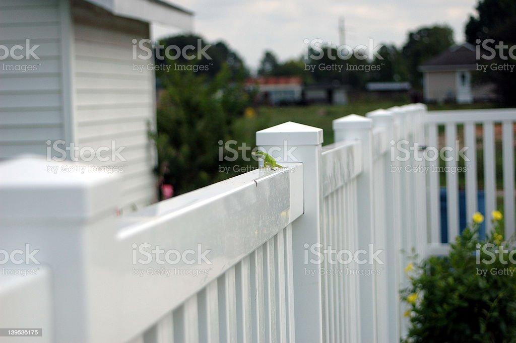lizard on fence stock photo