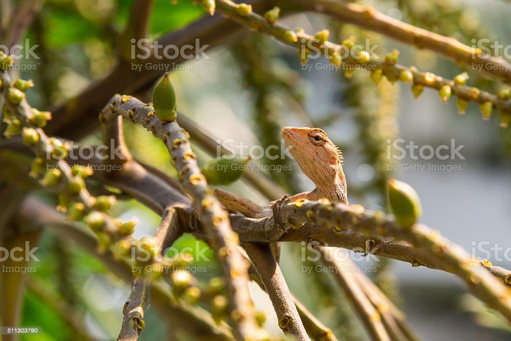 Lizard on the tree stock photo