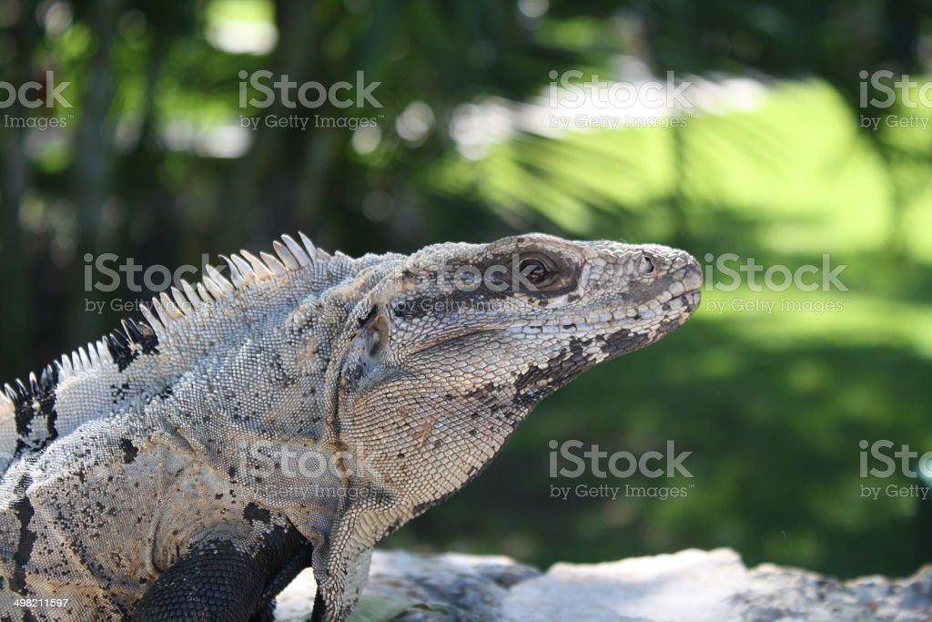 lizard Lizenzfreies stock-foto