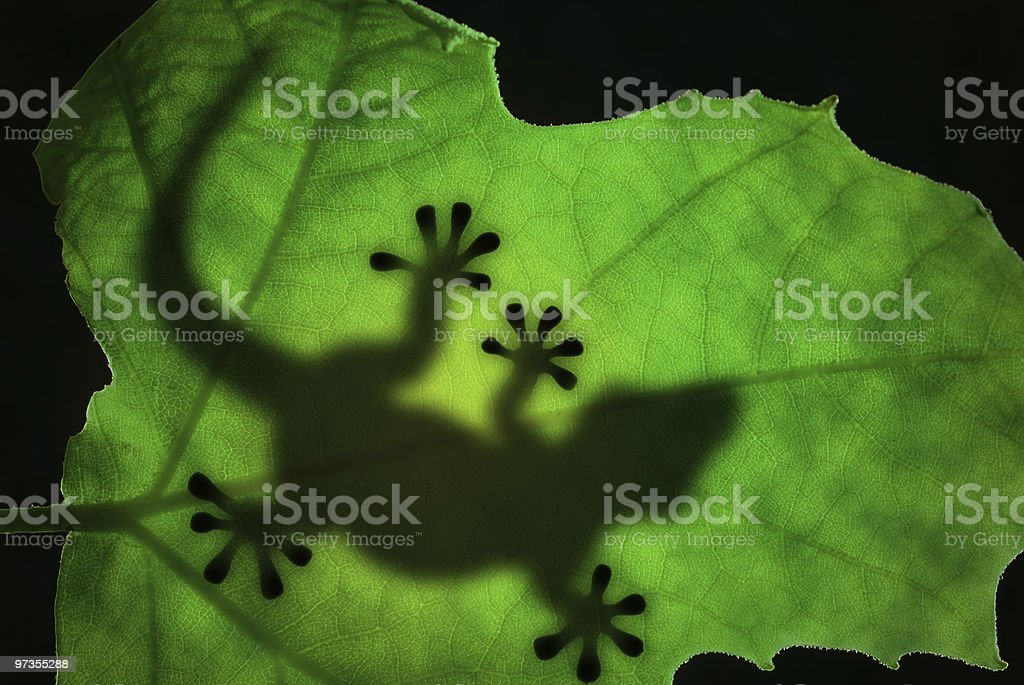 Lizard silhouette in the leaf royalty-free stock photo