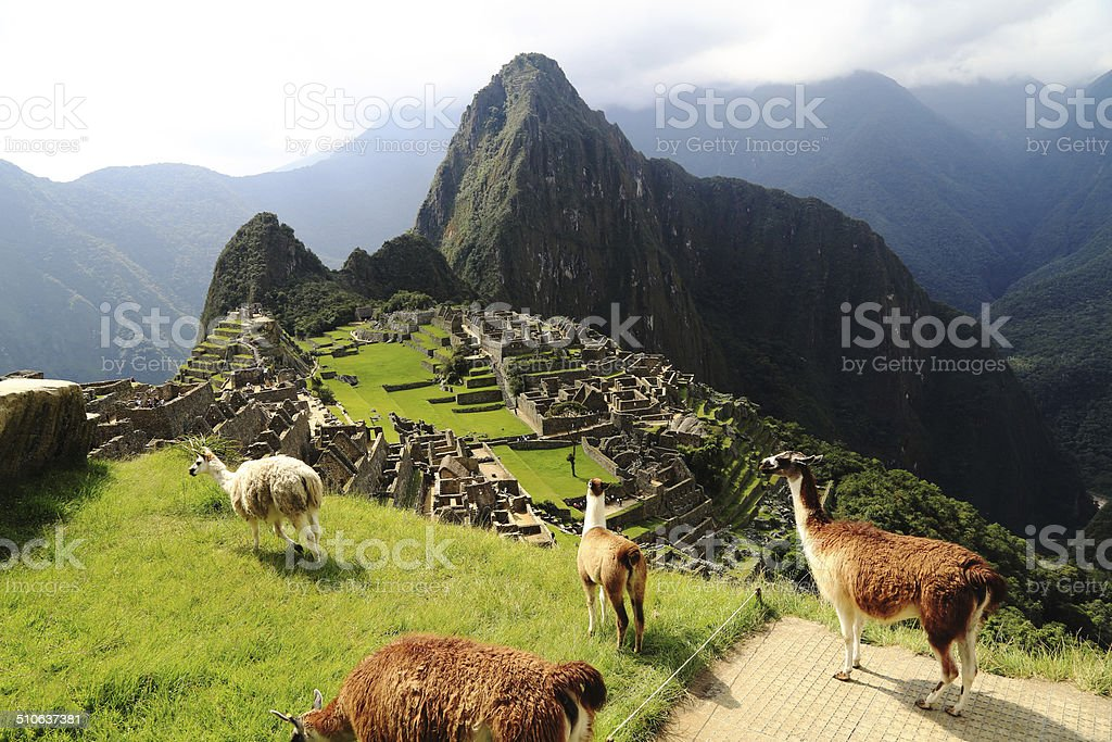 Llama at Machu Picchu, Peru stock photo