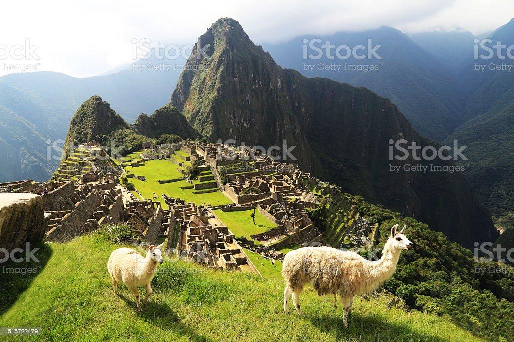Llama at Machu Picchu, Peru stock photo