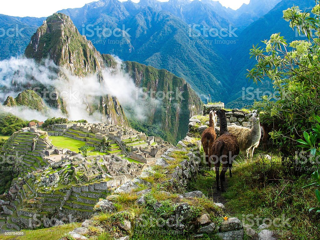 Llamas watch over Machu Picchu covered in mist stock photo