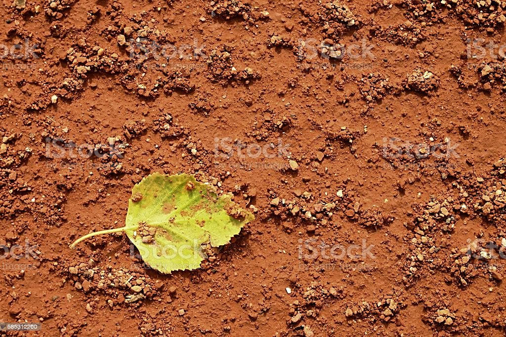 Lleaf on tennis court. Dry light red crushed bricks surface stock photo