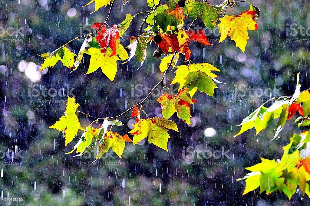 lluvia en otoño royalty-free stock photo