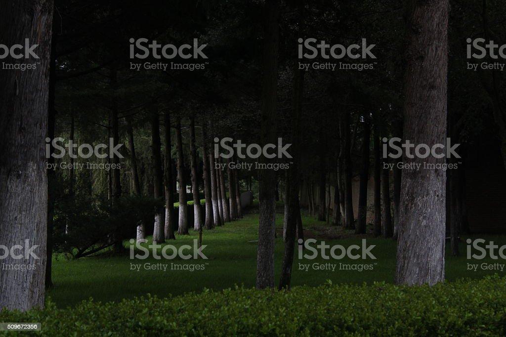 Líneas de árboles stock photo