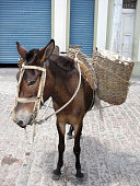 Load horse in the interior of Brazil