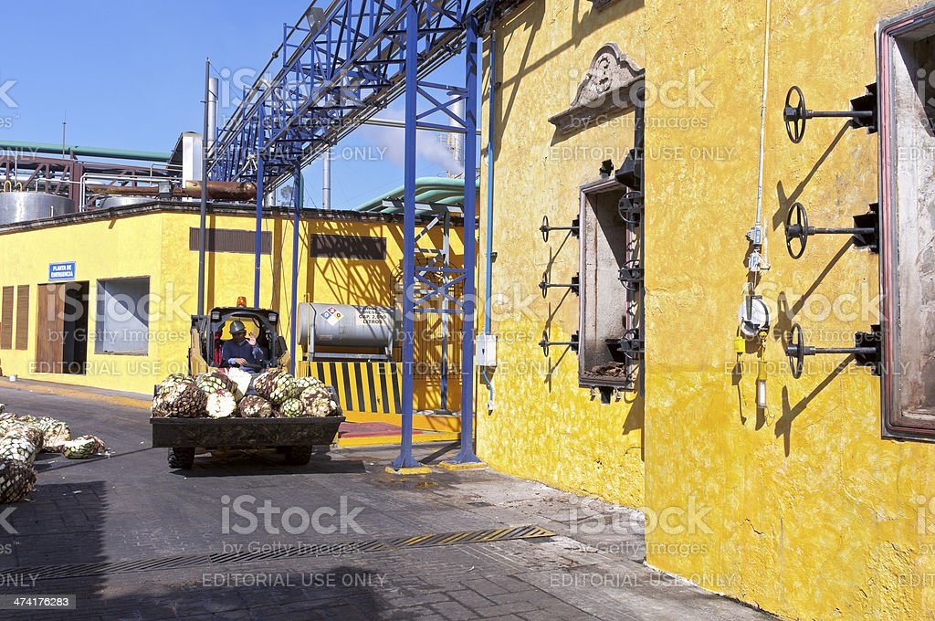 Load of Pineapples in Tequila Distillery stock photo