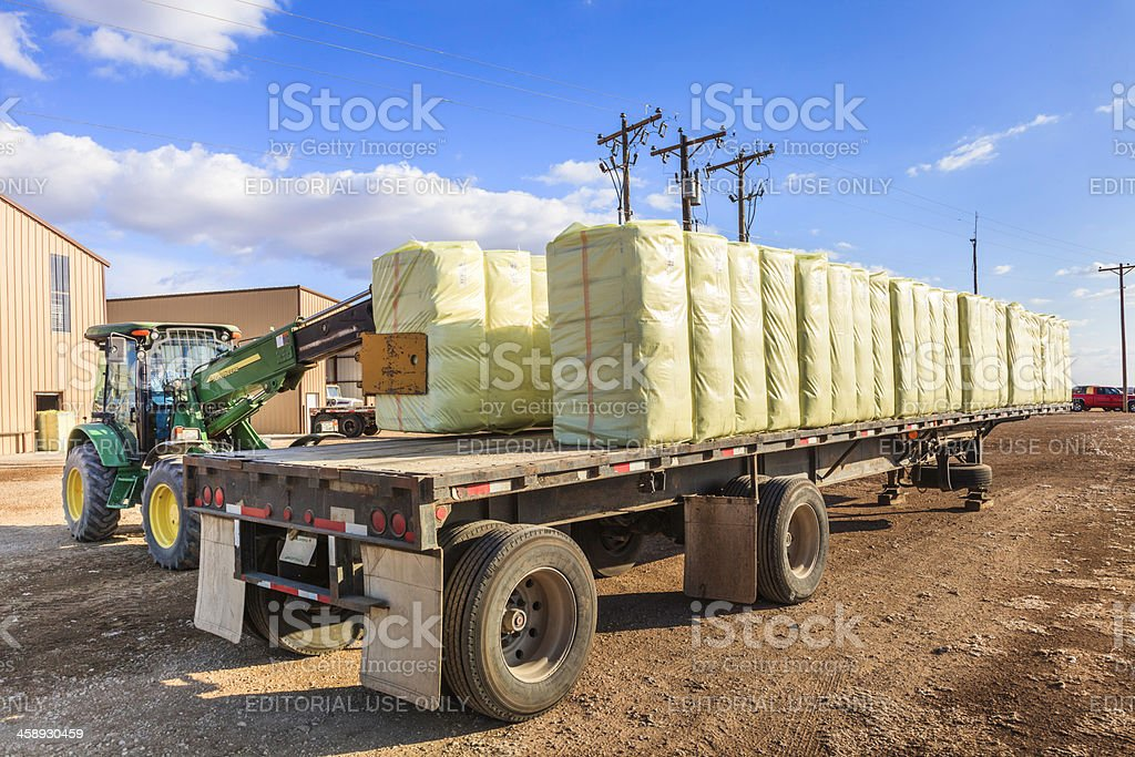 loader loads bales of cotton on flatbed trailer stock photo