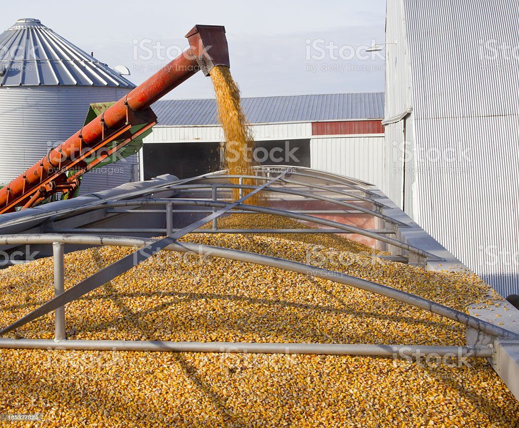 Loading corn from bins into trailer stock photo