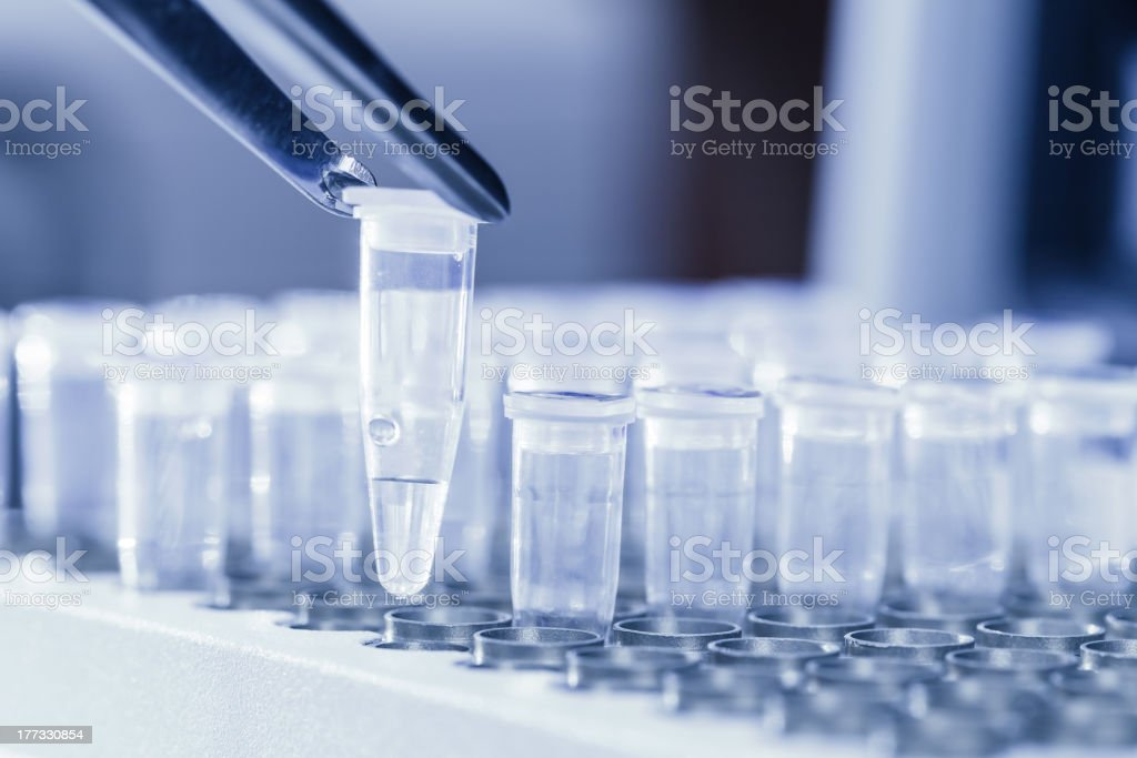 Loading DNA samples for PCR royalty-free stock photo