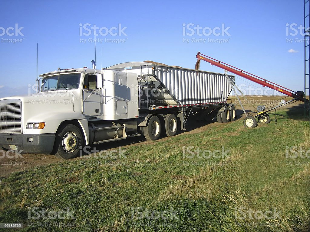 loading grain truck stock photo