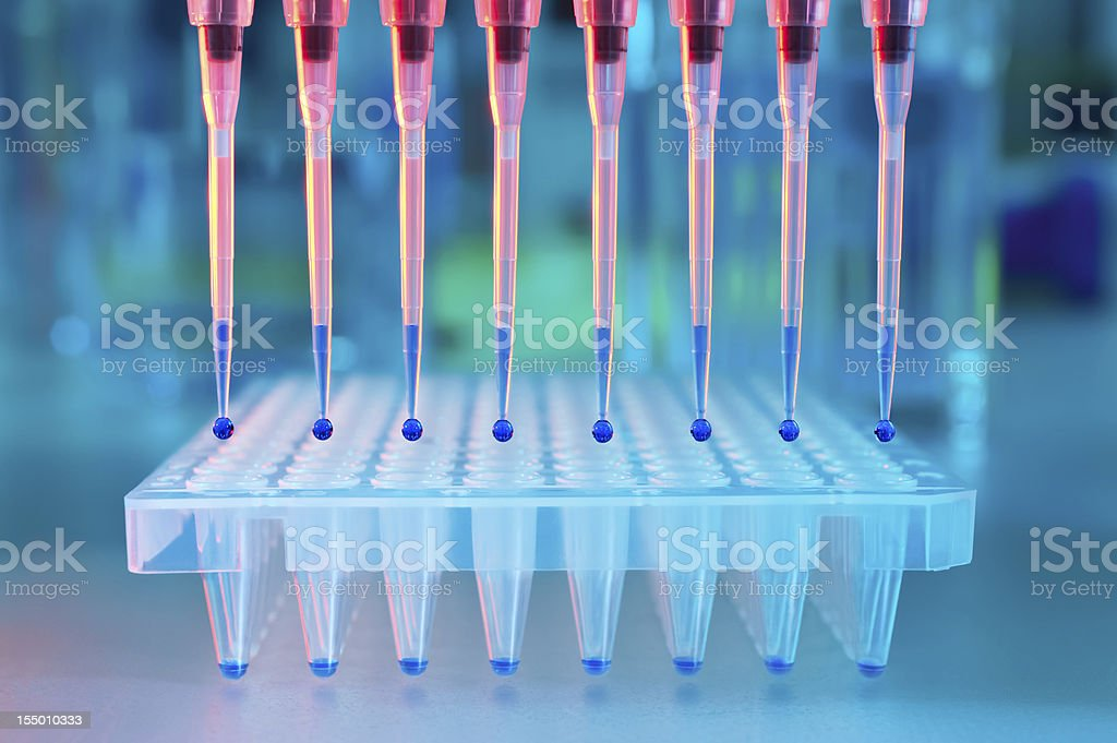 Loading of PCR with multichannel pipette stock photo