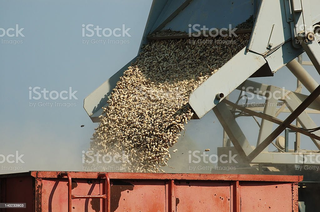 Loading Peanuts stock photo
