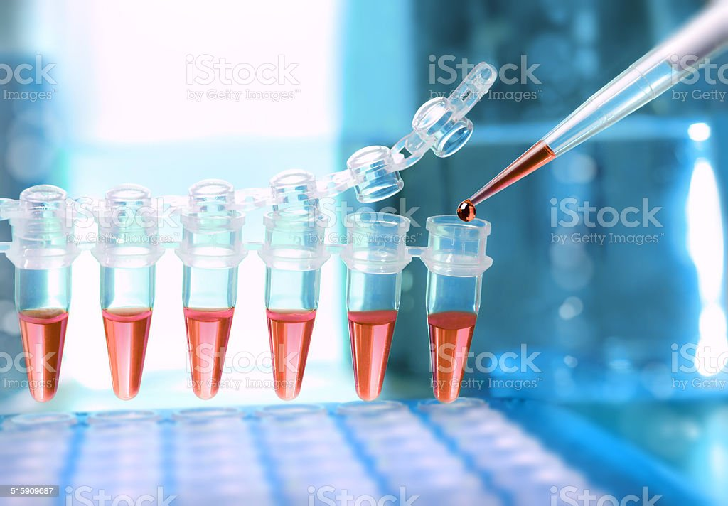 Loading samples for DNA amplification stock photo